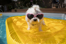 Portrait Cute Dog In Heart Shape Sunglasses On Pool Raft