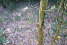 Close Up Buds On Spring Tree