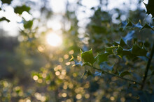 Sunshine Over Tranquil Holly T...
