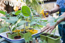 Woman Watering Potted Plants W...