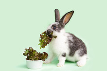 Little Baby Rabbit Eating Fresh Vegetables, Lettuce Leaves On Green Background. Feeding The Rodent With A Balanced Diet, Food. Bunny Is A Easter Symbol. Copy Space, Place For Text.