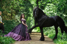 Young Brunette Girl In A Vintage Medieval Purple Dress With A Big Skirt Posing With A Black Horse Of The Friesian Breed