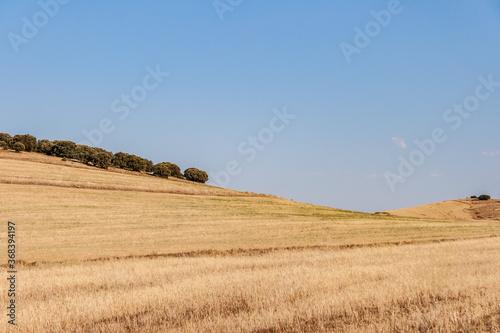 Campo seco de Aragón, cercano a la provincia de Soria Canvas Print