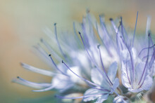 Floral Abstract Blurred Backgr...