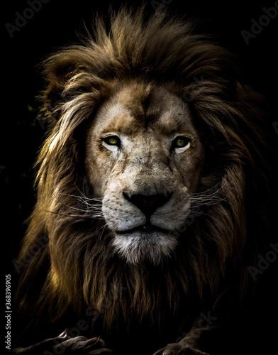 Fototapety, obrazy: The King