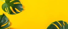 Summer Concept. Green Leaves Monstera On Yellow  Background. Flat Lay, Top View, Copy Space, Banner