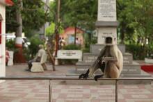 Indian Monkey Sitting On The M...