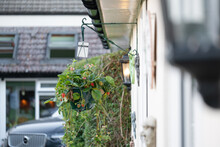 Shallow Focus Of A Strawberry Plant Hanging Basket Seen Attached To An Annex Of A Private House. A Car Is Seen Parked In A Private Driveway.