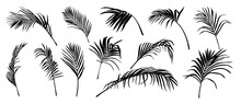Palm Leaves Vector. Shadow Of ...