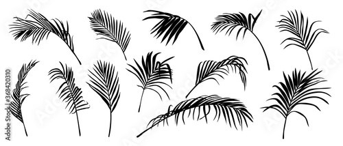Photo Palm Leaves vector