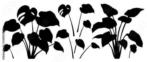 Fotomural Tropical leaves vector collection