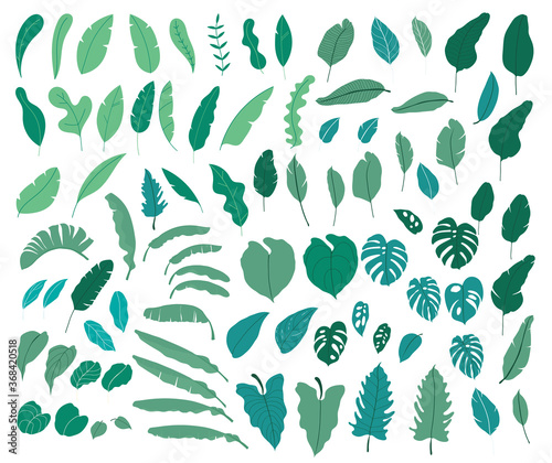Tropical leaves vector collection. Set of silhouettes monochrome jungle exotic leaf, Philodendron, Palm leaves, Areca palm, Royal fern, Banana leaf isolated on white background. Vecor illustration Wall mural