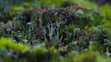 Sol Forestier Recouvert Par Divers Champignons Et Petites Plantes