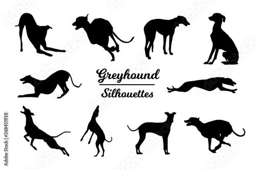 Greyhound dog silhouettes. Black and white outline Canvas Print