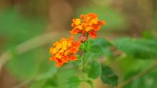 Orange Flower In Portrait Mode.