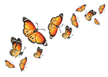 Flying Butterflies. The Concep...