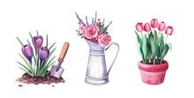 Watercolor Spring Crocus In Th...