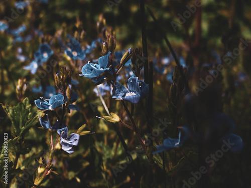 Kwiaty jak z bajki