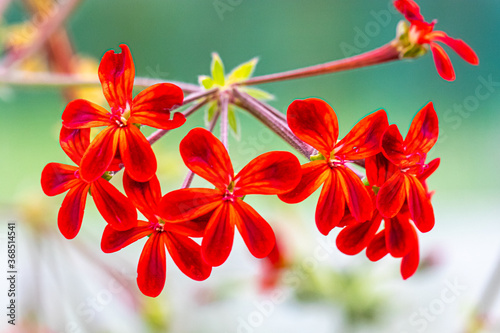 flower of the exotic garden of Roscoff, in Brittany Fototapete