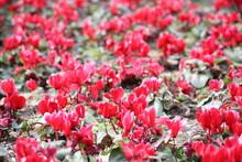 Jardin De Surtido De Flores Ro...