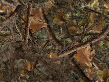 Realistic Forest Camouflage. Seamless Pattern. Conifer And Oak Branches And Leaves. Useable For Hunting And Military Purposes.