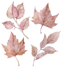 Watercolor Pink Maple And Birc...