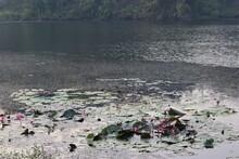 Water Lilly At Boga Lake