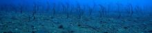 Sea Eels Underwater / Garden Eels, Sea Snakes, Wild Animals In The Ocean