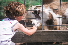 Feeding Animals In Petting Zoo