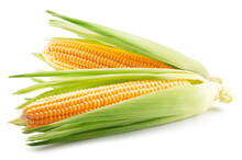 Corn Ears Isolated On A White Background