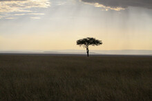 Lone Tree In Kenya Africa, Sun...