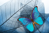 Natural blue background. bright blue tropical morpho butterfly and skeletonized leaves. copy space