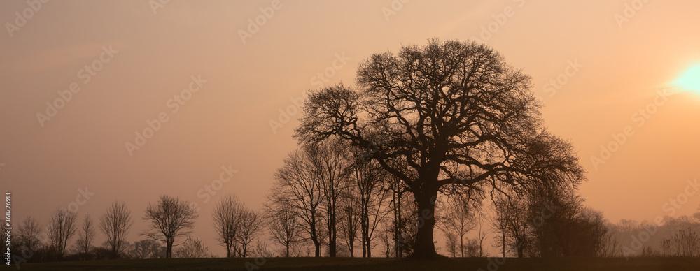 Obraz alte Eiche im Winter, Baumbestattung, Ruheforst, Waldfriedhof fototapeta, plakat