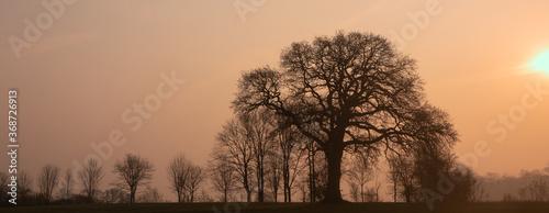 Fototapeta alte Eiche im Winter, Baumbestattung, Ruheforst, Waldfriedhof obraz