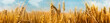 canvas print picture - Agriculture panorama with a wheat field Saisonal wheat field in luminous golden colors. Close-up with short depth of field and abstract bokeh. Background for a nutrition concept.