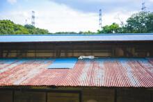 トタン屋根の上でくつ...