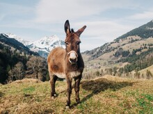 Donkey Standing In Front Of Mountains, View On Mountains