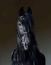 Friesian Horse Low Key Portrait In A Dark Stable