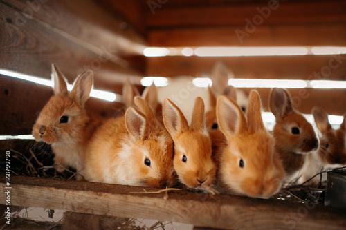 close up of baby rabbits at an eco farm Fototapet