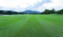 Beautiful Green Grass Field Of...