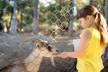 Little Girl Feeding Goat. Child At Outdoors Petting Zoo. Kid Having Fun In Farm With Animals. Children And Animals. Fun For Kids On School Holidays.