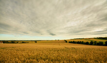 Getreidefeld In Niederösterreich