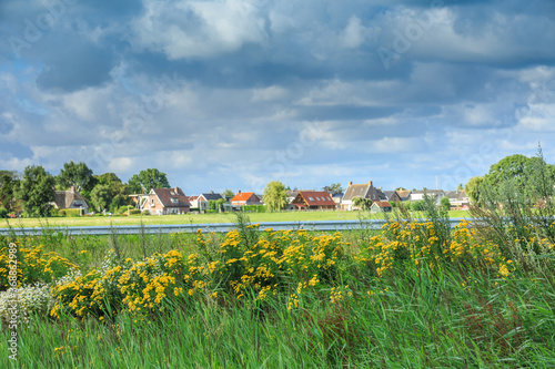 Slika na platnu Polder landscape with yellow flowering Tansy, Tanacetum vulgare, in foreground a
