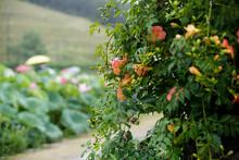 Nature Green Flower Trumpet Cr...