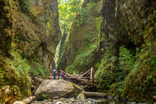 Hikers Scrambling Over A Log J...