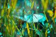 Bajkowy świat - piękny motyl
