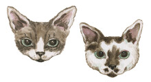 Cat. Nice Illustration For For...
