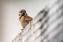 Low Angle View Of Bird Perching On Wall