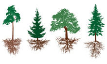 Set Of Trees With Roots. Pine, Spruces, Oak With Rootage. Vector Illustration.