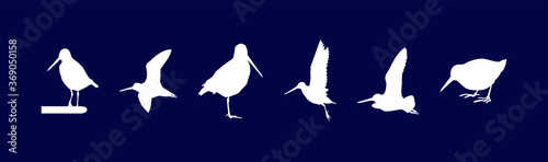 Stampa su Tela a set of common snipe drum silhouettes. vector illustration